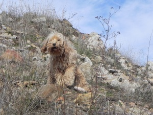 Perro en Purroy
