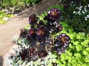 288. Inverewe Garden