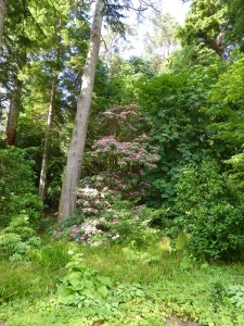 299. Inverewe Garden