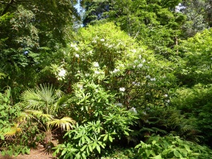 302. Inverewe Garden