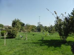 Plaza Jast Imom