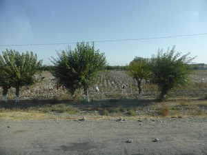 380. De Samarcanda a Bujara