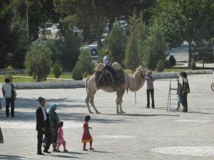 474. Bujara. Camello bactriano