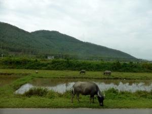 805. De Da Nang a Hué