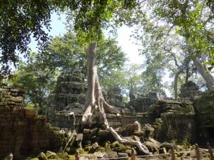 077. Angkor Thom. Ta Prohm