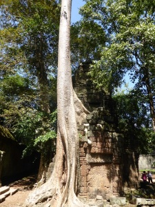 081. Angkor Thom. Ta Prohm