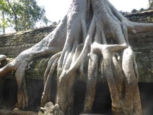 086. Angkor Thom. Ta Prohm