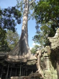 098. Angkor Thom. Ta Prohm