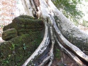104. Angkor Thom. Ta Prohm