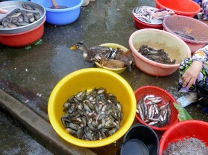 1245. Mercado de Cai Rang