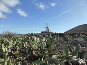 229. Guatiza. Jardín de Cactus