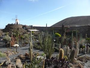 230. Guatiza. Jardín de Cactus