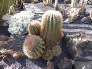 234. Guatiza. Jardín de Cactus