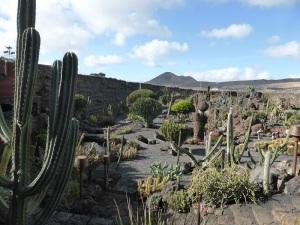 248. Guatiza. Jardín de Cactus
