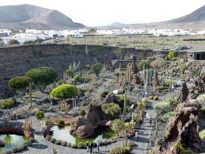 253. Guatiza. Jardín de Cactus