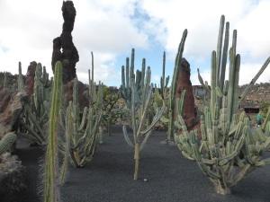 282. Guatiza. Jardín de Cactus