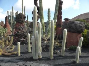 289. Guatiza. Jardín de Cactus