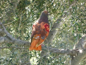 332. Talatí de Dalt. Pájaro sobre el talayot