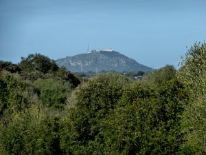 381. Monte Toro desde Torralba de'n Salort
