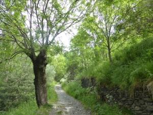 203. Nuestra Señora de Meritxell. Camino de Prats