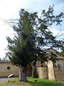 113. San Pedro de Villanueva