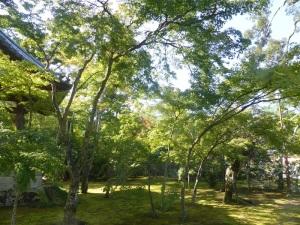 026. Kyoto. Templo de Kinkaku-ji