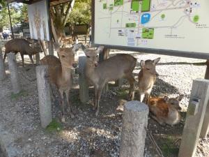 188. Nara. Templo Todai-ji