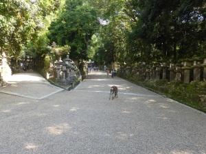 257. Nara. Santuario Gran Kasuga