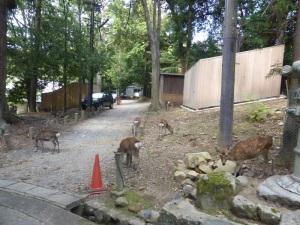 271. Nara. Santuario Gran Kasuga