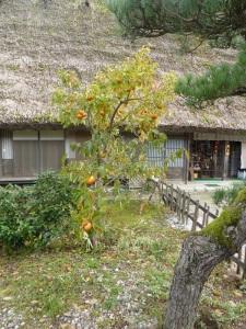 364. Shirakawago. Palosanto