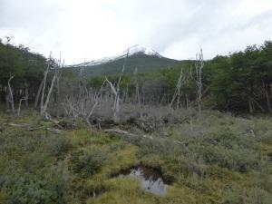 1100. Parque Nacional de Tierra de Fuego
