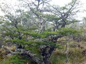 1105. Parque Nacional de Tierra de Fuego