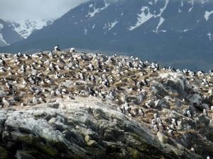 1157. Ushuaia. Navegación por el canal de Beagle. Isla de los Pájaros