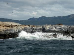 1160. Ushuaia. Navegación por el canal de Beagle. Isla de los Lobos