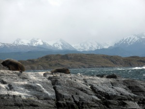 1172. Ushuaia. Navegación por el canal de Beagle. Isla de los Lobos