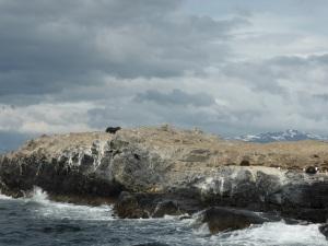 1177. Ushuaia. Navegación por el canal de Beagle. Isla de los Lobos