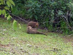 1219. Iguazú