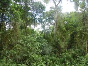 1318. Iguazú
