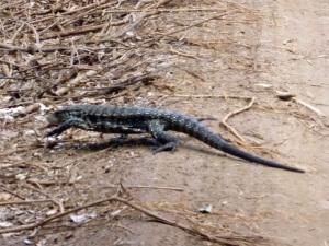1319. Iguazú