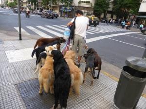 273. Buenos Aires. Paseador de perros