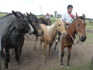 337. La Pampa. Estancia turística Don Silvano