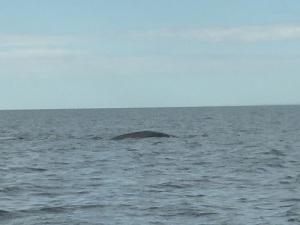 428. A avistar ballenas