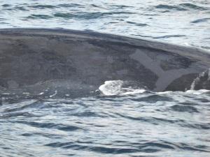 434. A avistar ballenas