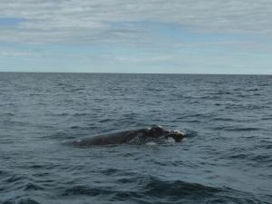 435. A avistar ballenas