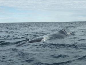 437. A avistar ballenas