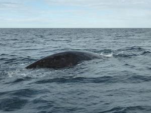 438. A avistar ballenas