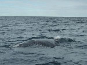 439. A avistar ballenas