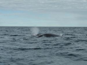 442. A avistar ballenas