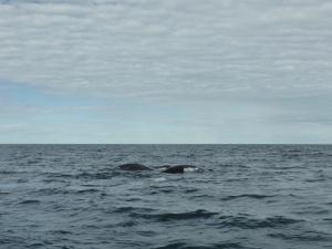 443. A avistar ballenas