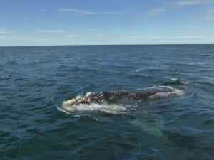 453. A avistar ballenas
